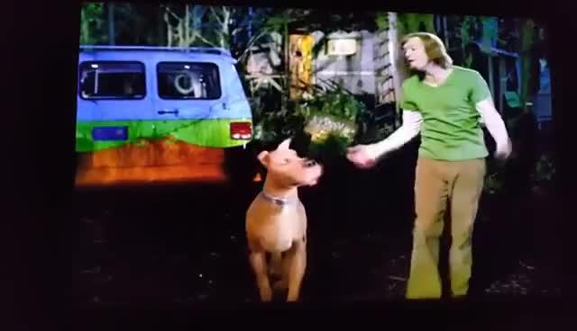 Scooby Doo 2 Monsters Unleashed Escape Scene Gif Gfycat
