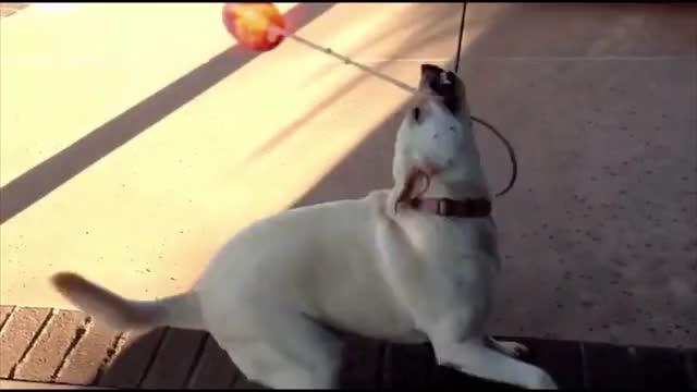 Watch and share Dog Spinning Fireball GIFs on Gfycat