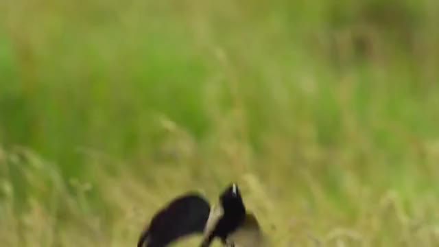 Watch and share Bbc Worldwide GIFs and Nature GIFs by likkaon on Gfycat