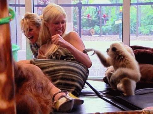 animal, animal pictures, animals, cute, funny, gif, gifs, lol, love, monke, monkey, monkey gif, monkeys, nicole richie, paris hilton, picture, lol monkey nicole richie paris hilton the simple life Favim com GIFs