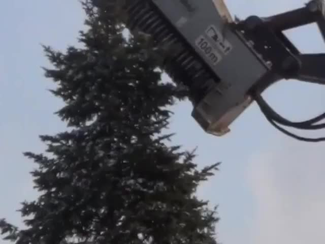 Watch and share Tree Killer GIFs on Gfycat