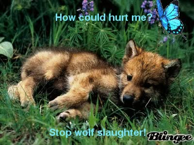 Watch Cute wolf pup GIF on Gfycat. Discover more related GIFs on Gfycat