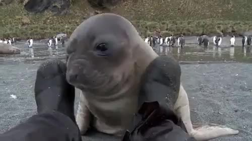 Watch and share Seal GIFs by hyperking69 on Gfycat