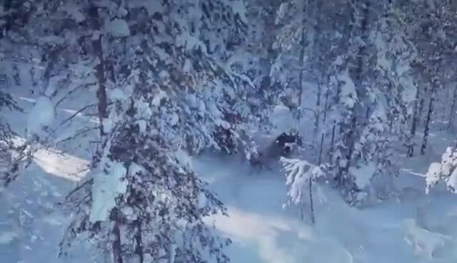 Watch and share Santa Claus And Reindeer On The Road - Lapland - Finland - Rovaniemi - Father Christmas GIFs on Gfycat