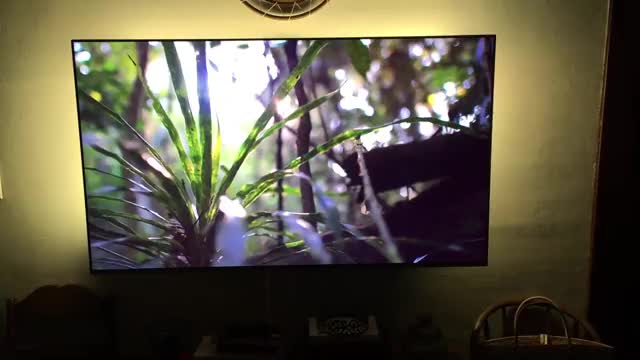 Watch and share Planet Earth GIFs and Philips Hue GIFs by ScreenBloom on Gfycat