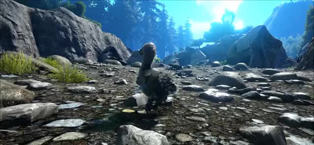 Watch and share Survival GIFs and Evolved GIFs by MsCatbug on Gfycat