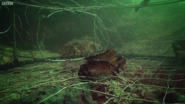Octopus Steals Crab From Fisherman | Super Smart Animals | BBC Earth