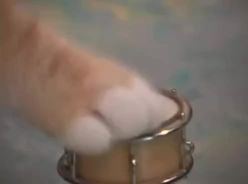 Watch paw GIF on Gfycat. Discover more paw GIFs on Gfycat