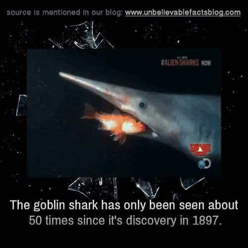 Watch and share Goblin Shark GIFs and Mysterious GIFs on Gfycat