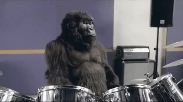 Watch Drum Solo! GIF by @fuzzusmaximus on Gfycat. Discover more monkeypics GIFs on Gfycat
