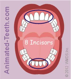 Watch and share Link To Types Of Baby Teeth Animation. GIFs on Gfycat