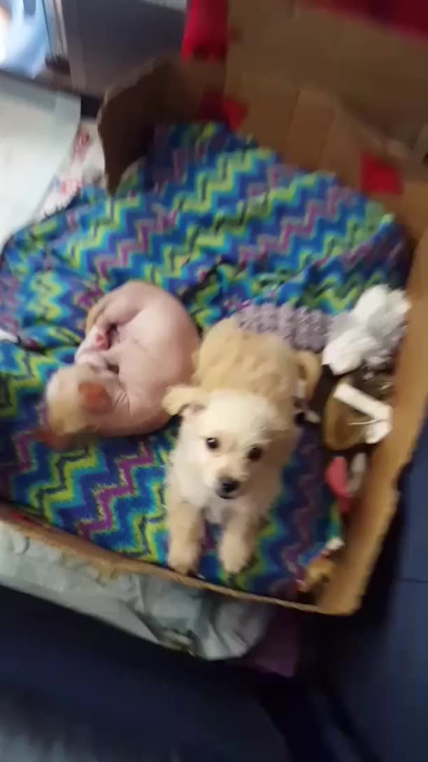 Watch and share Puppies GIFs by onedaybehind on Gfycat