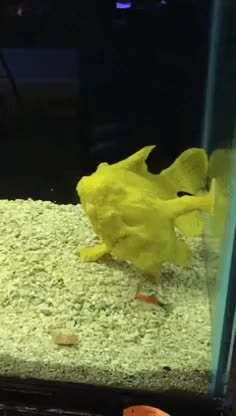 Watch and share Aquariums GIFs on Gfycat