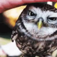 Watch and share Cute Owls GIFs on Gfycat