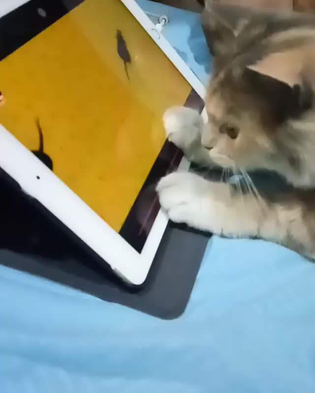 Watch and share Kitty Gamer GIFs by RespectMyAuthoriteh on Gfycat