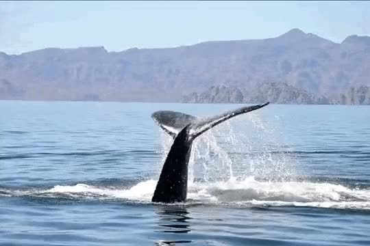 Watch and share Whale Tail GIFs on Gfycat