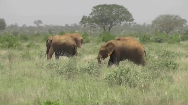 Watch Healthy herd on the savannah pt2  GIF by PM_ME_STEAM_K3YS (@pmmesteamk3ys) on Gfycat. Discover more related GIFs on Gfycat