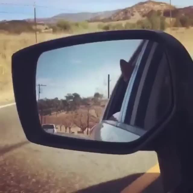 Watch California Highway Patrol's Secret Weapon. GIF by @likkaon on Gfycat. Discover more related GIFs on Gfycat