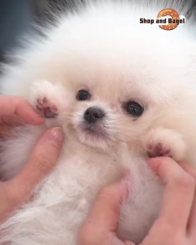 Watch and share NEW- LOW NOISE PET CLIPPER GIFs by Nikkie Cinco Munda on Gfycat