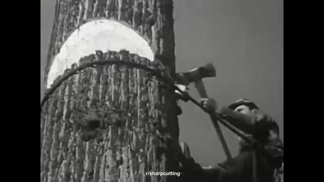 Watch and share Imabigprick GIFs by chimpychompies on Gfycat