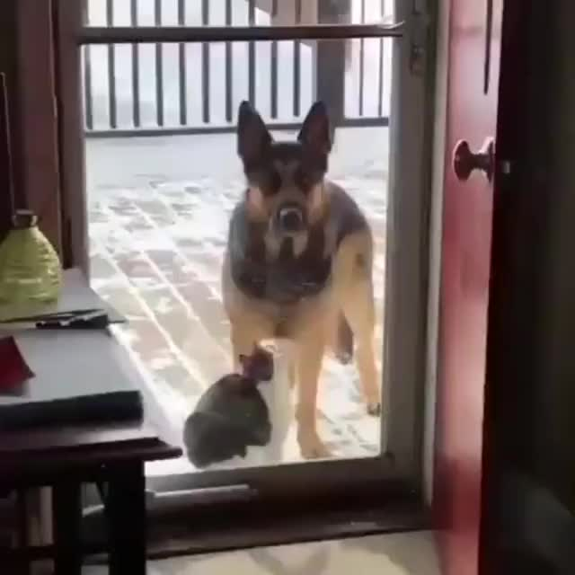 Watch and share Best Buds GIFs by MyNameGifOreilly on Gfycat