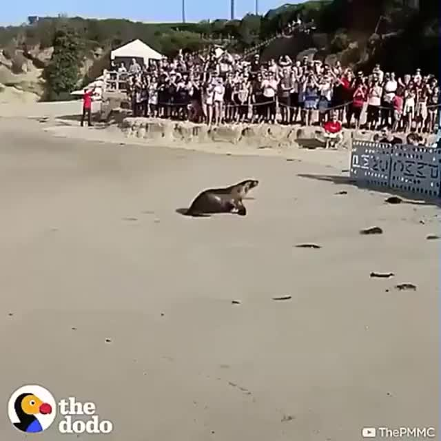 Watch and share Seal GIFs by ItsMeTaylor on Gfycat