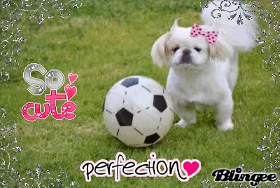 Watch and share Please Join If You Want The Pekingese To Be On Dogzer.net ! GIFs on Gfycat