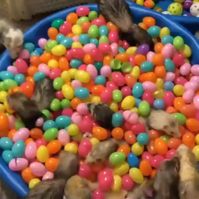 Watch and share Ball Pit GIFs and Ferrets GIFs by Wilson on Gfycat