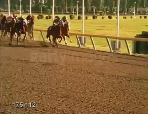 Watch Horse Racing Music Video GIF on Gfycat. Discover more related GIFs on Gfycat