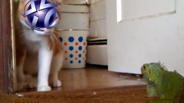 Watch and share Lizard Squad 1 - PSN 0 GIFs on Gfycat