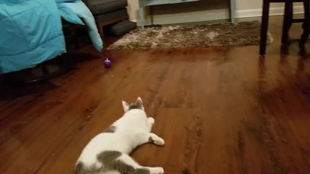 Watch and share Ferocious Kitten Attack GIFs by Megan Piscitelle on Gfycat