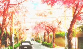 Watch and share Cherry Blossom Tree GIFs and Miyazono Kaori GIFs on Gfycat