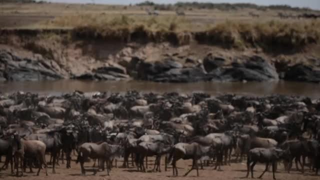 Watch and share Wildlife GIFs and Kenya GIFs by basecampexplorer on Gfycat