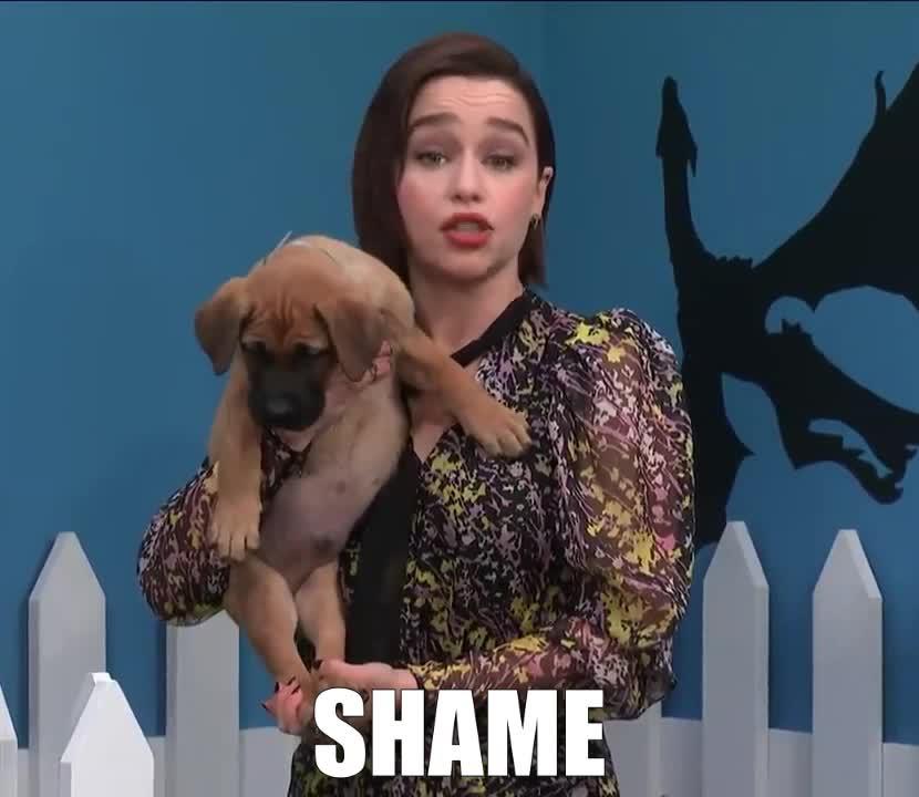 ashamed, clarke, colbert, didn't, dog, embarrassed, embarrassing, emilia, game, got, no, of, oh, on, puppy, rescue, shame, stephen, thrones, you, Emilia Clarke - Shame GIFs