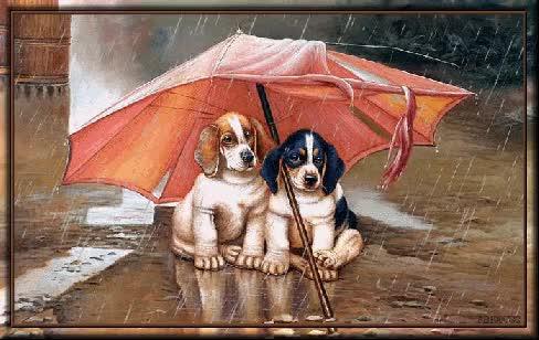 Watch and share Hunde Im Regen GIFs on Gfycat