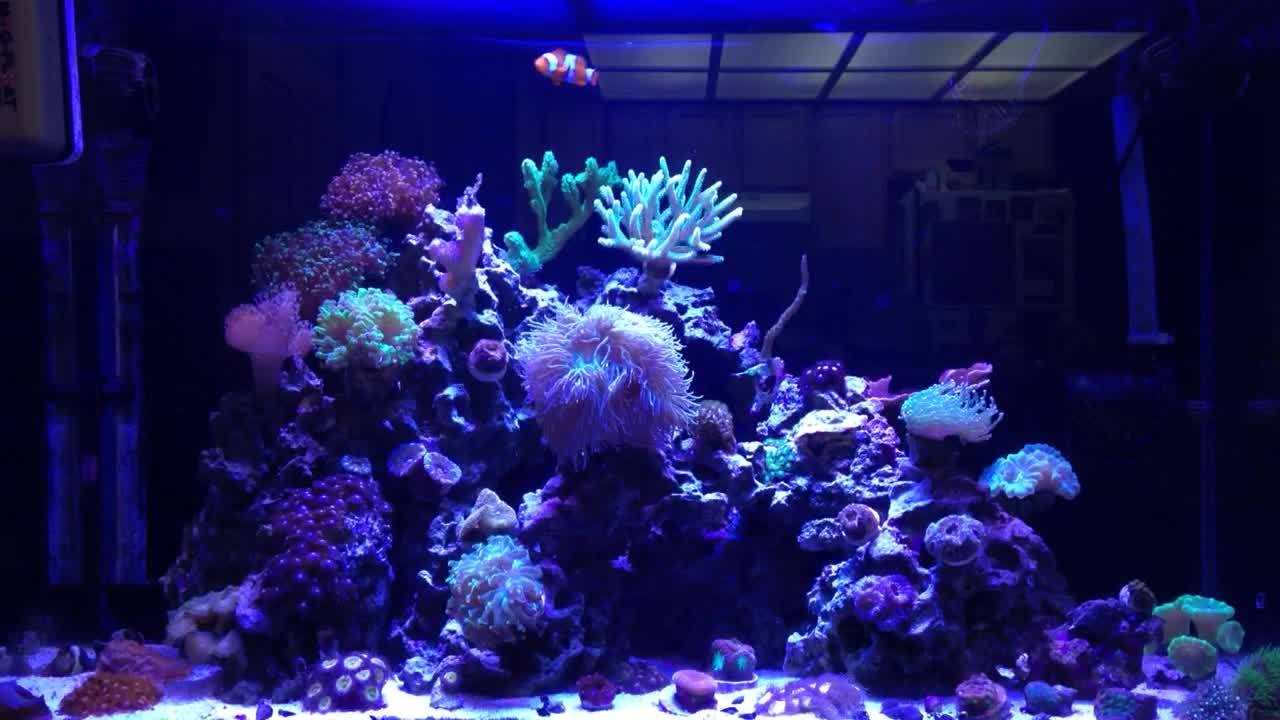 reeftank, my29gallon GIFs