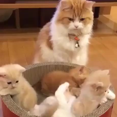 Watch and share Cat1 GIFs and Cat3 GIFs on Gfycat