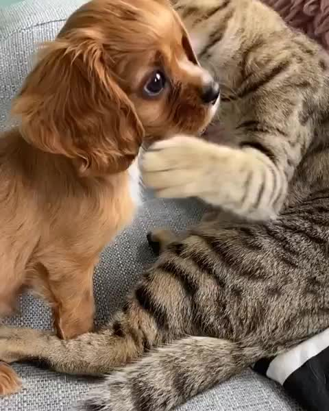 Watch and share Cat GIFs and Dog GIFs by mayaxs on Gfycat