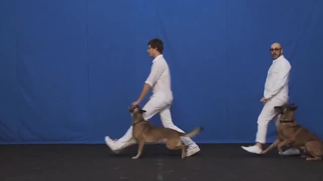 Watch and share White Knuckles GIFs and Dogs GIFs by OK Go on Gfycat