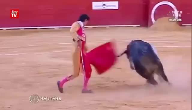Watch and share Matador Killed In Spain Bullfight GIFs on Gfycat