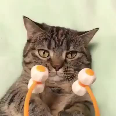 Watch Cat Roller GIF on Gfycat. Discover more aww GIFs on Gfycat