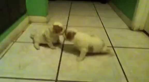 Watch and share Puppies GIFs and Cute GIFs on Gfycat