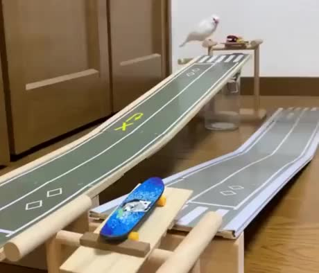Watch and share Skater Birdy GIFs by Gif-vif.com on Gfycat
