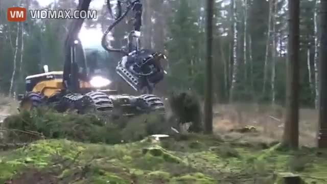 Watch and share Tree Terminator... GIFs on Gfycat