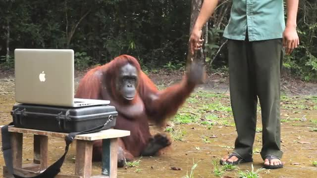 Watch AMAZING! Orangutan asks girl for help in sign language GIF on Gfycat. Discover more Action, All Tags, Deforestation, Indonesia, Kellogg, Kraft, PepSi, Ran, amazing, emissions, gas, girl, heinz, hershey, inyourpalm, orangutan, org, palm, rainforests, smuckers GIFs on Gfycat