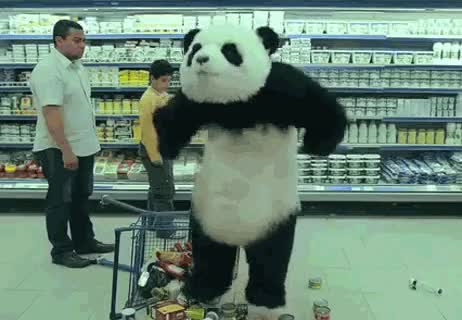 Watch panda GIF on Gfycat. Discover more related GIFs on Gfycat