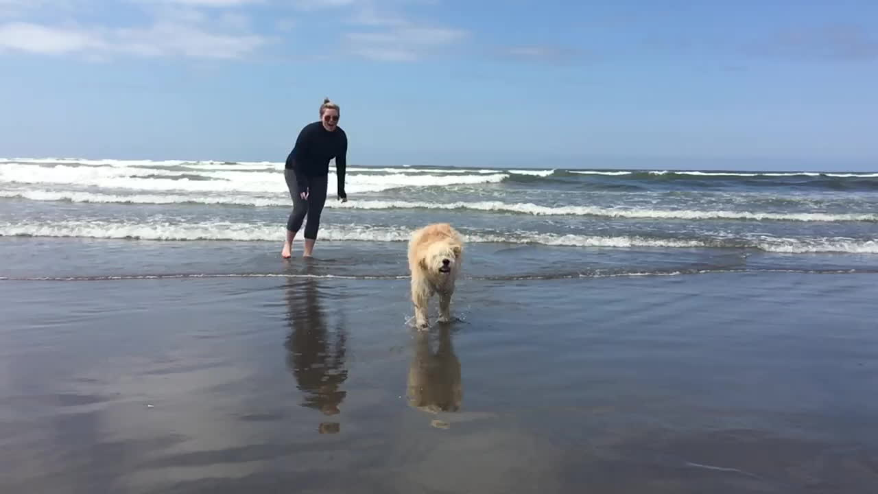 eyebleach, gifs, Goldendoodle Puppy Baywatch Style GIFs