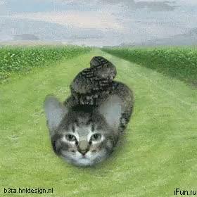 Watch and share Картинки GIFs and Котэ GIFs on Gfycat