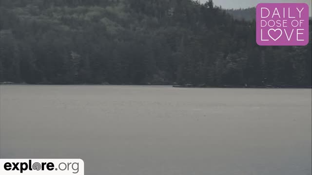 Watch and share Daily Dose Of Love GIFs and British Columbia GIFs by Explore.org on Gfycat