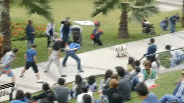awww, dog, skateboard, skills, Puppy Skate GIFs